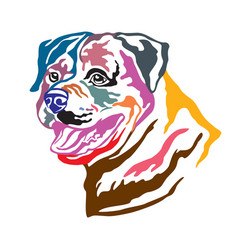 colorful decorative portrait of dog rottweiler vector image