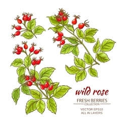 Dog rose hips set vector