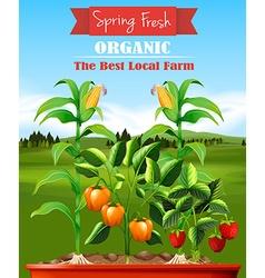 Fresh vegetables in the farm vector