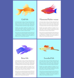 Gold betta and swordtail fishes colorful banners vector