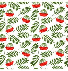rowan berries and leaves pattern vector image
