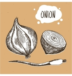 Onion in engraving vintage style Hand drawn onion vector image vector image