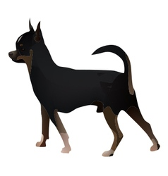 Chihuahua 2014 11 27 04228 vector