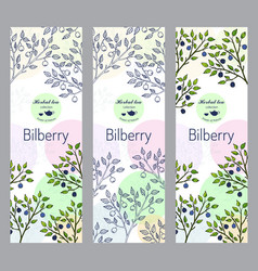 Herbal tea collection bilberry banner set vector