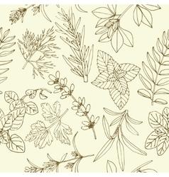 Herbs seamless pattern vector