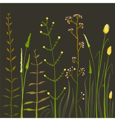 Wild Field Flowers and Grass on Black vector