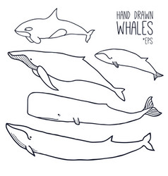 Hand drawn whales set vector