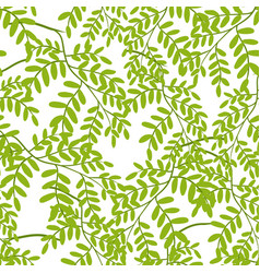 Seamless pattern with acacia leaves vector