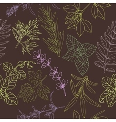 Herbs seamless pattern on a dark background vector image vector image