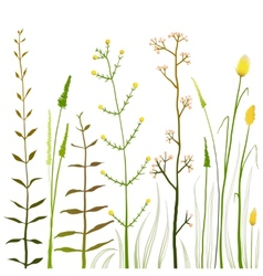 Wild Field Flowers and Grass on White Collection vector image vector image