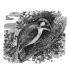 Woodpecker vintage engraving vector image vector image