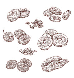 Candied berries and dried fruits food sketches vector