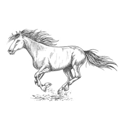 Rush running horse sketch portrait vector