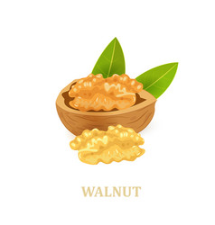walnuts with leaves on white background for your vector image
