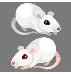 Laboratory white albino rat animal vector