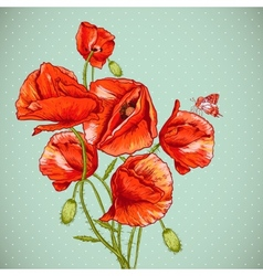 bunch beautiful red poppy vector image