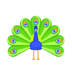 flat style peacock vector image
