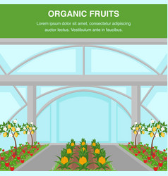 organic fruits indoor cultivation poster template vector image
