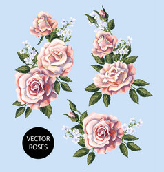 set tea roses bouquet their buds vector image