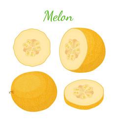 yellow ripe melon cartoon flat style vector image