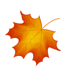 autumn maple leaf on a white background vector image