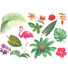 Exotic watercolor tropical set vector