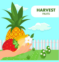 fruits summer harvest poster flat template vector image