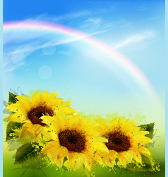nature background with sunflowers and rainbow vector image