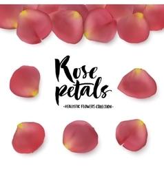 Realistic pink rose petals set vector