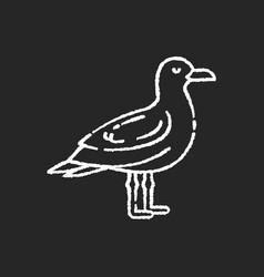 Seagull chalk white icon on black background vector