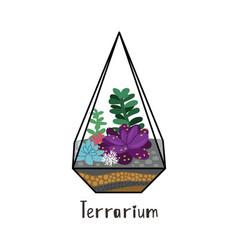 succulents in terrarium vector image