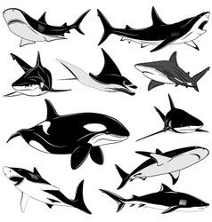 set of various sharks tattoo vector image vector image