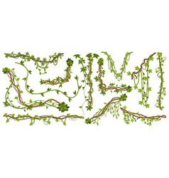 jungle liana plants tropical vine branches vector image