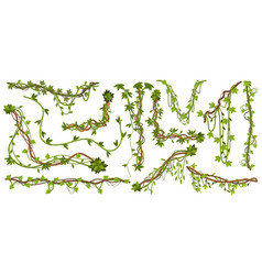 jungle liana plants tropical vine branches with vector image