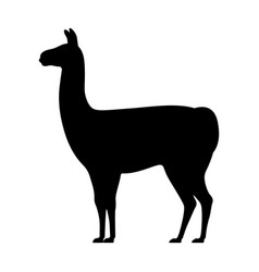 llama silhouette isolated on white vector image