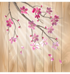 Spring cherry blossom flowers on a wood texture vector image vector image