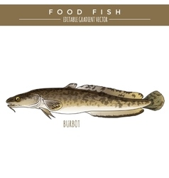 Burbot Marine Food Fish vector image