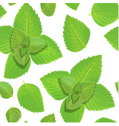 fresh mint seamless pattern vector image