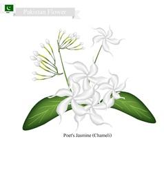 Poets Jasmine The National Flower of Pakistan vector