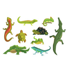 reptiles and amphibians set of vector image