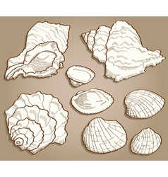 Seashell set in vintage style vector image