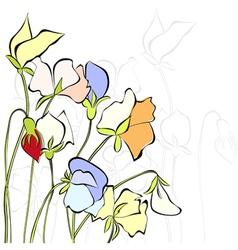 Sweet pea flowers vector