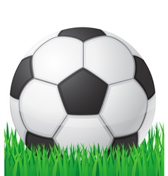 football soccer ball in grass vector image vector image