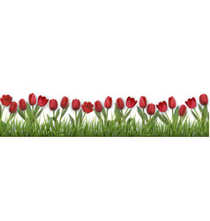 red tulips and grass vector image
