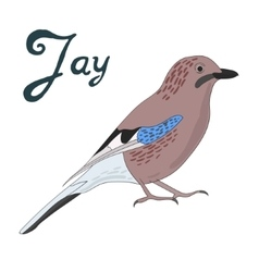 Bird jay vector