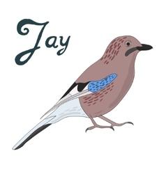 Bird jay vector