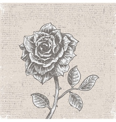 Rose with vintage background vector