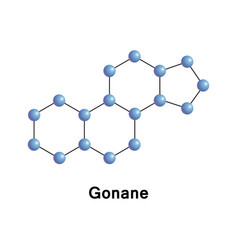 gonane known as perhydrocyclopentaphenanthrene vector image