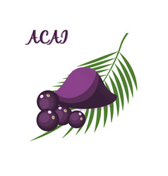 superfood acai berry powder and leaves isolated vector image