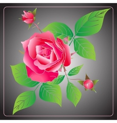 Stencil Roses vector image